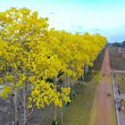 Foto da cidade de TRACUATEUA